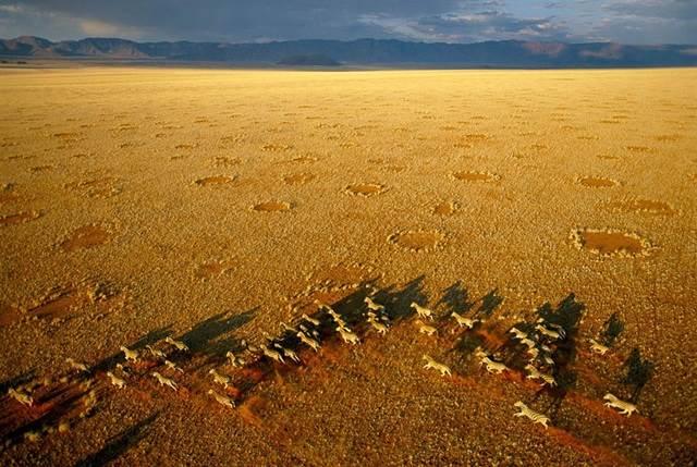 sekumpulan zebra di NamibRand Nature Reserve, Namibia