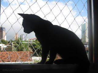 proteção de janela para gatos