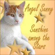 RIP Sunshine-Kitty