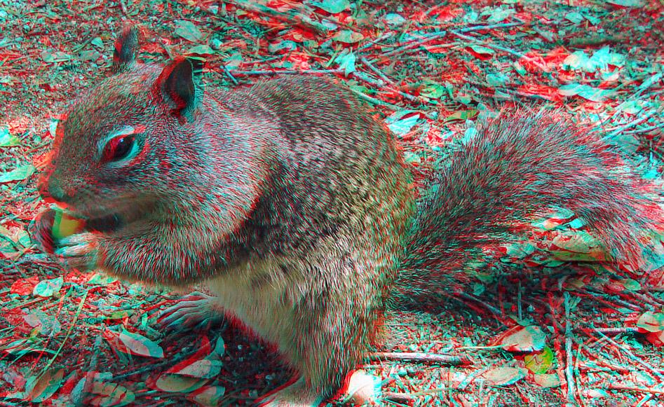 Imagem 3D esquilo