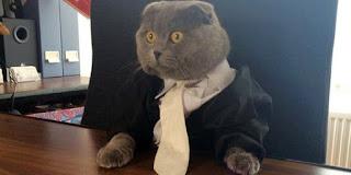 kucing direktur