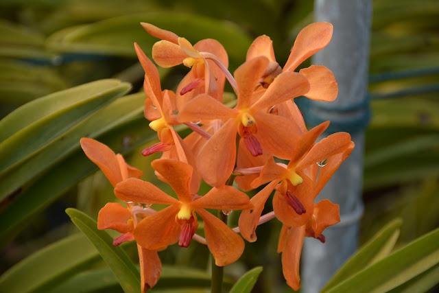 Orchid Garden Kuala Lumpur