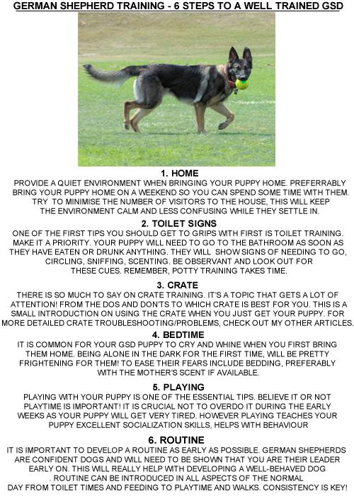 6 Steps To German Shepherd Puppy Training