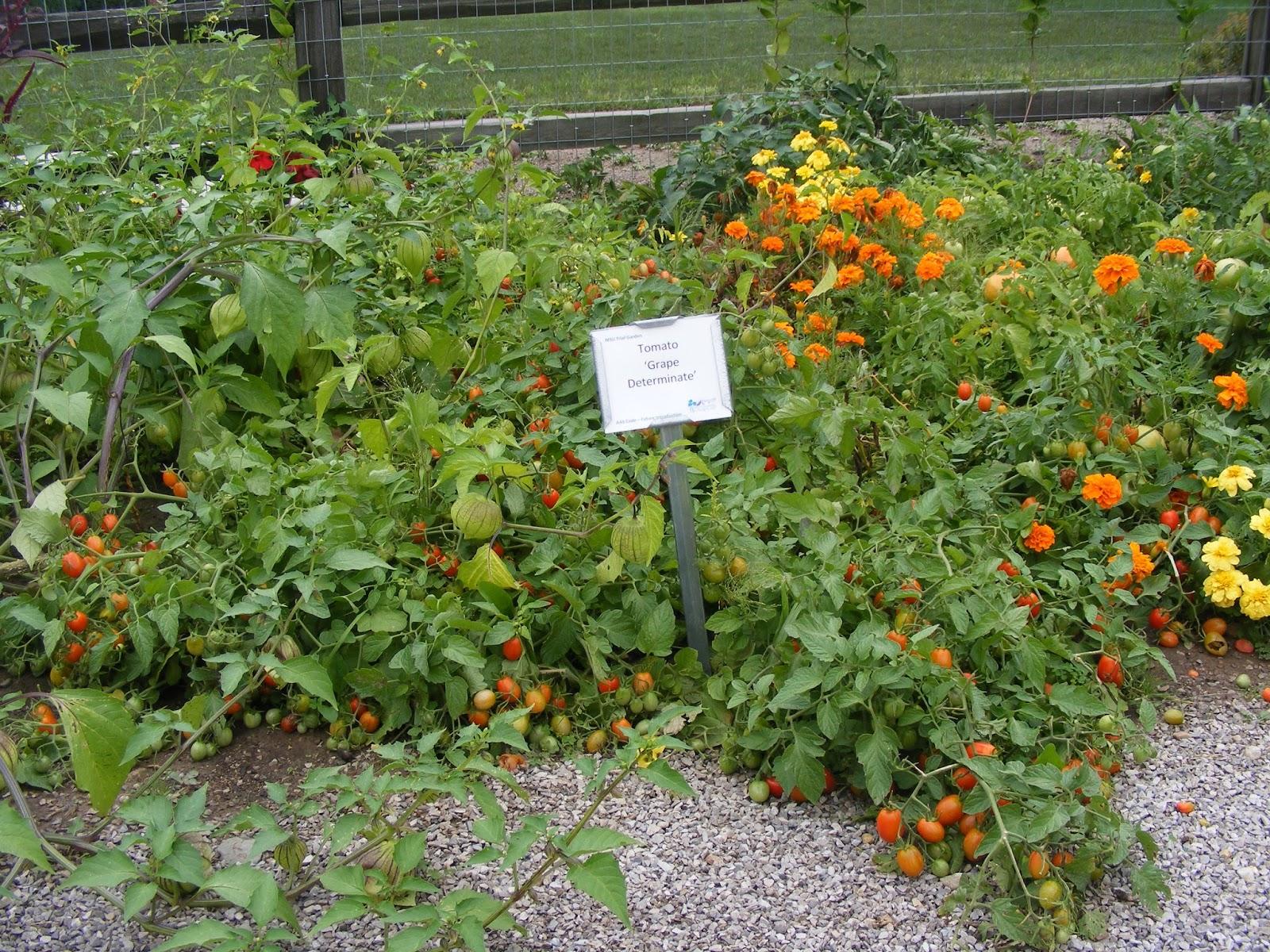 Flower Garden Eaton Rapids Michigan: Eaton Rapids Joe: August 2013