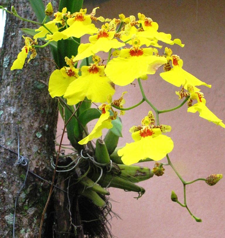 Descargar Imagenes De Flores Gerberas - Pink gerbera, pétalos de flores Wallpapers gratis