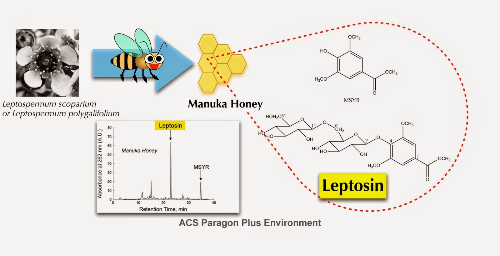 biosintesis glikosida steroid