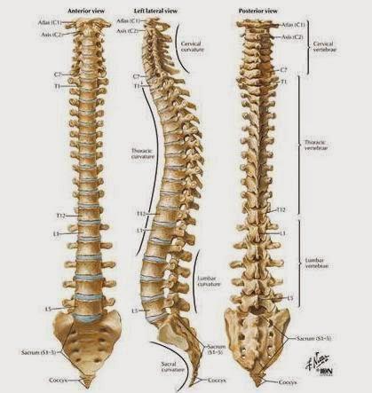 Cara Mengobati Tulang Ekor Sakit