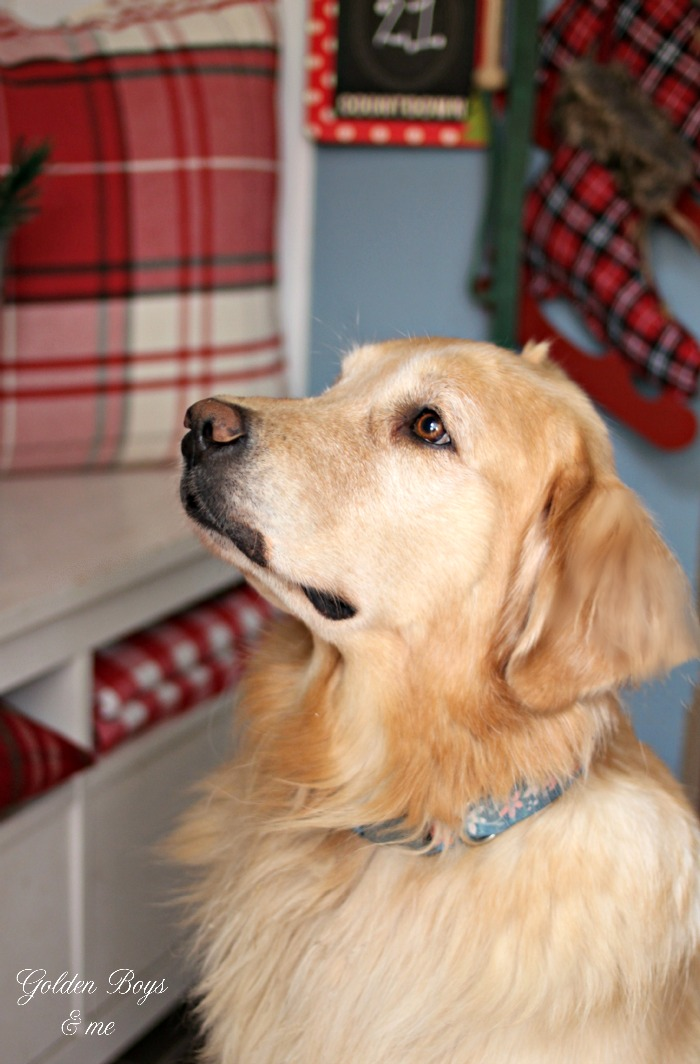 golden retriever in mudroom with Christmas decor - www.goldenboysandme.com