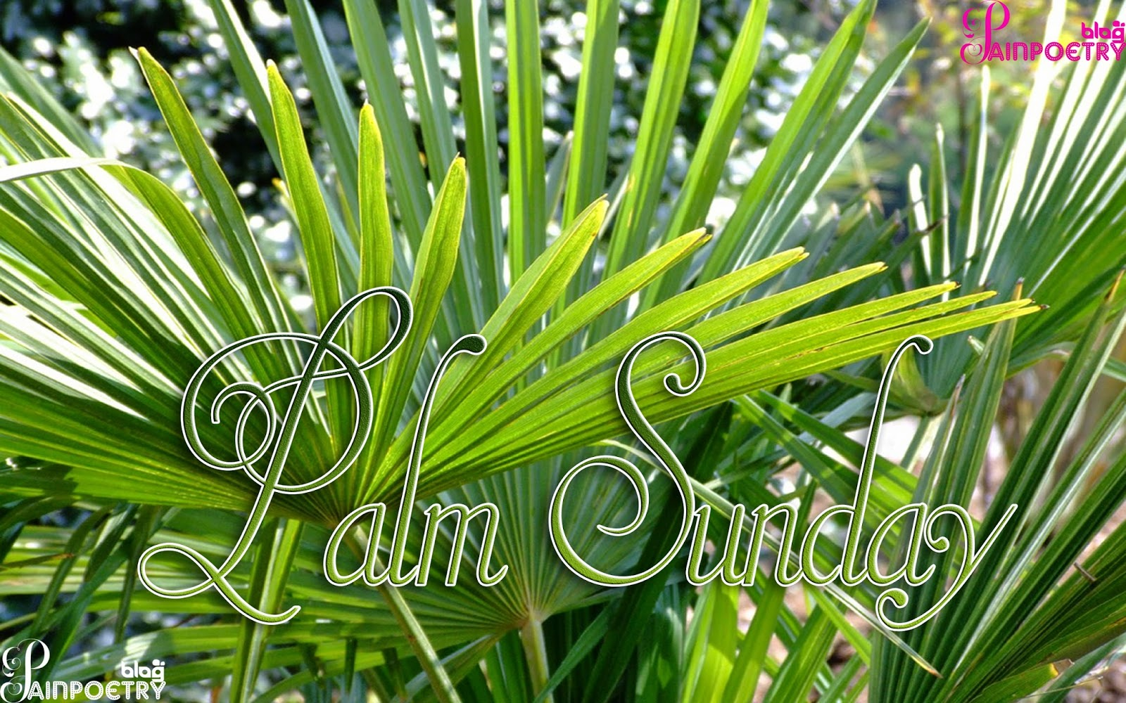 Palm-Sunday-Palm-Image-Wallpaper-HD