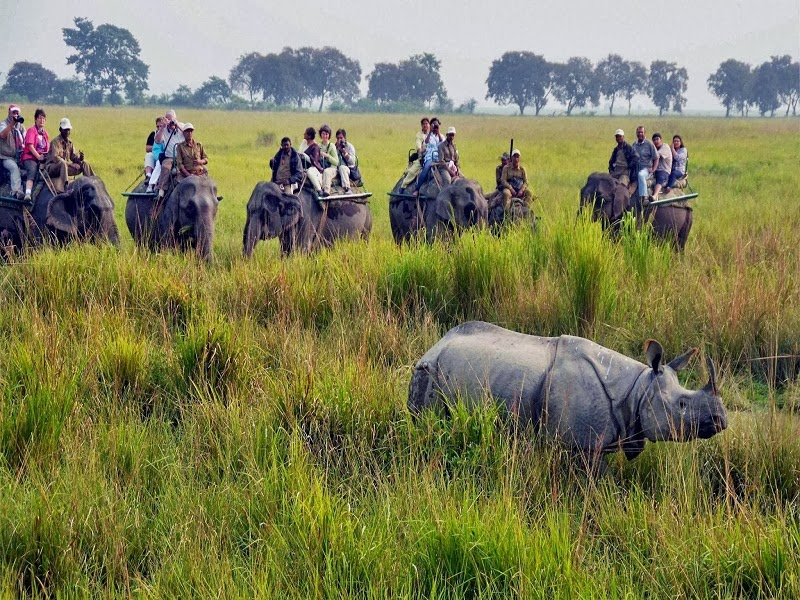 Kaziranga National Park - a world heritage site, the park hosts two-thirds of the world's Great One-horned rhinoceros.