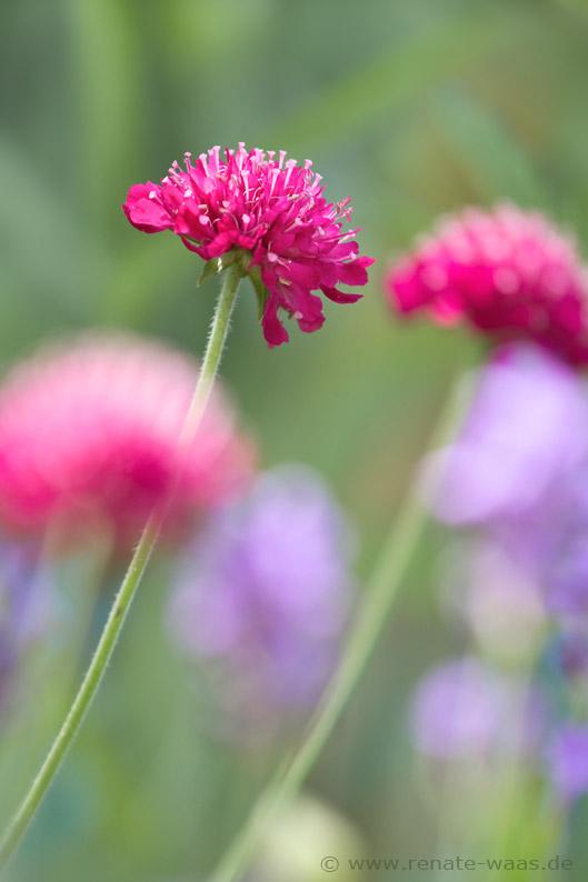 Gartenblog geniesser garten staudenbeet planen und anlegen - Geniesser garten ...