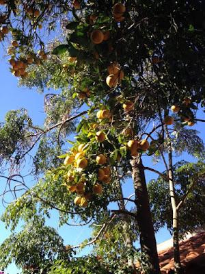 Lunchen onder sinaasappelbomen