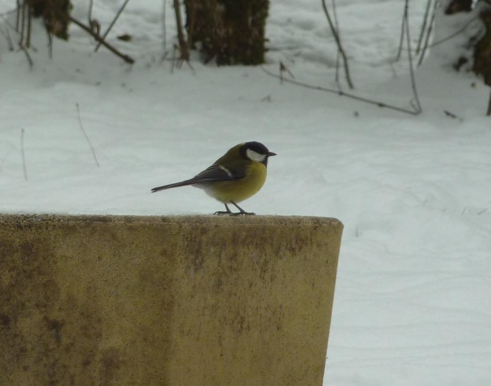 Un lapin dans le jardin oiseaux du jardin dans la neige - Faire fuir les oiseaux dans un jardin ...