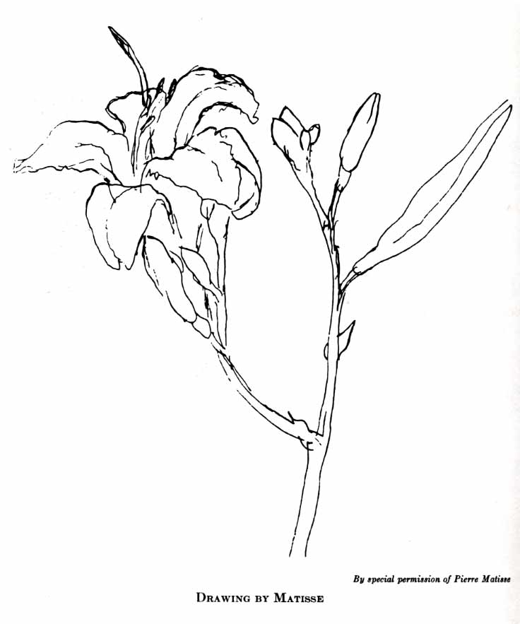 Contour Line Drawing Of A Flower : Creating with kaiser contour drawing