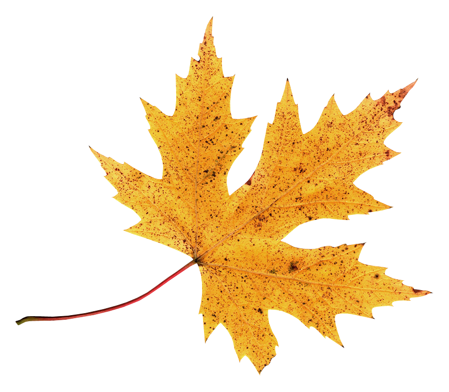 клипарт листья:
