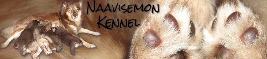 Naavisemon kennel