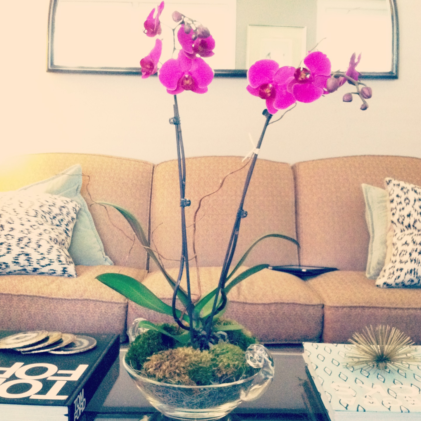 How To Style An Orchid Like A Pro