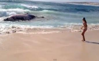 chica viendo como los tiburones se comen a una ballena