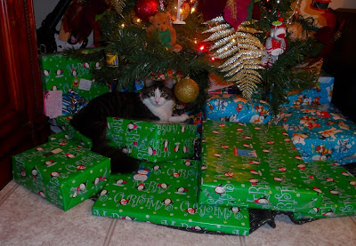 Anakin The Two Legged Cat &amp; The Christmas Presents