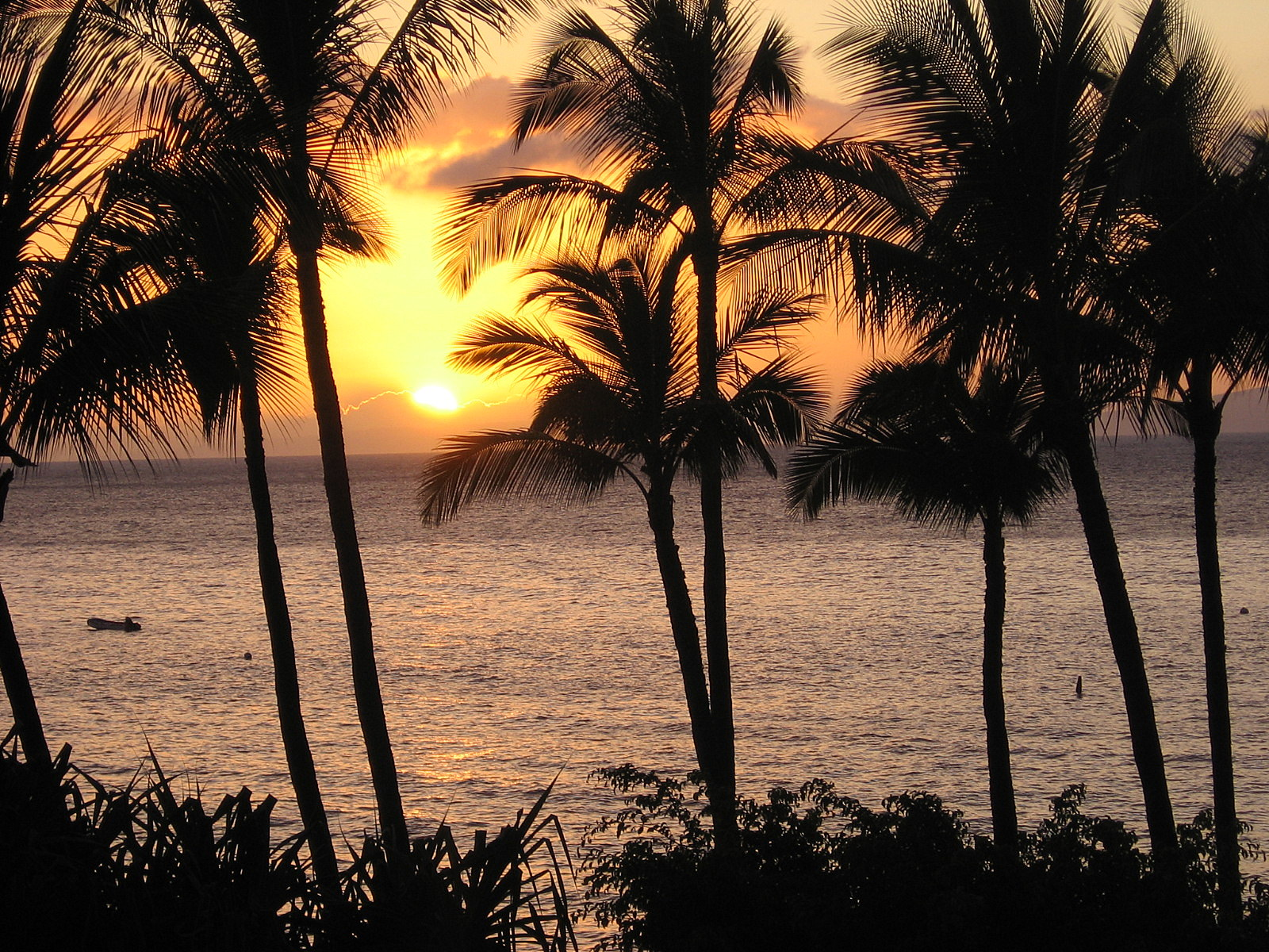 Free Wallpapers Palm Silhouette Big Island Hawaii Travel - palm silhouette big island hawaii wallpapers