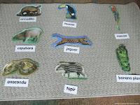 NAMC montessori preschool classrooms curriculum activities south america animal names