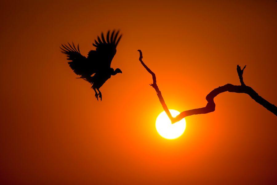 4. Landing at Sunset by Mario Moreno