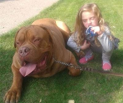 Bé Lexi và con chó gây ra vụ tấn công