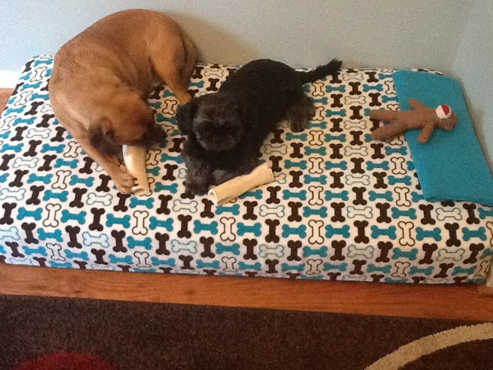 sarah with an h dog bed. Black Bedroom Furniture Sets. Home Design Ideas