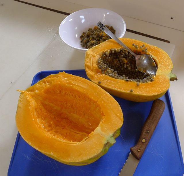 Galley Wench Tales Papaya As Big As A Babys Head
