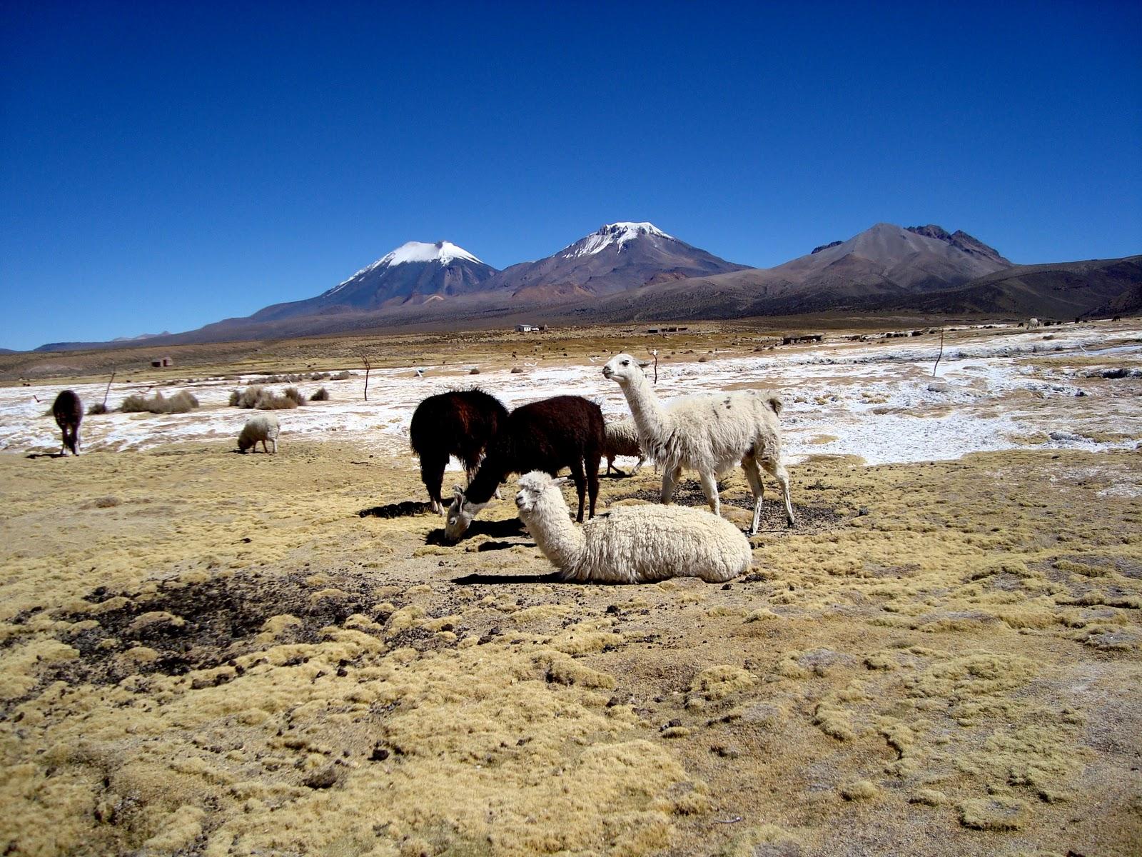 Solo para ver parque sajama bolivia for Piletas naturales argentina