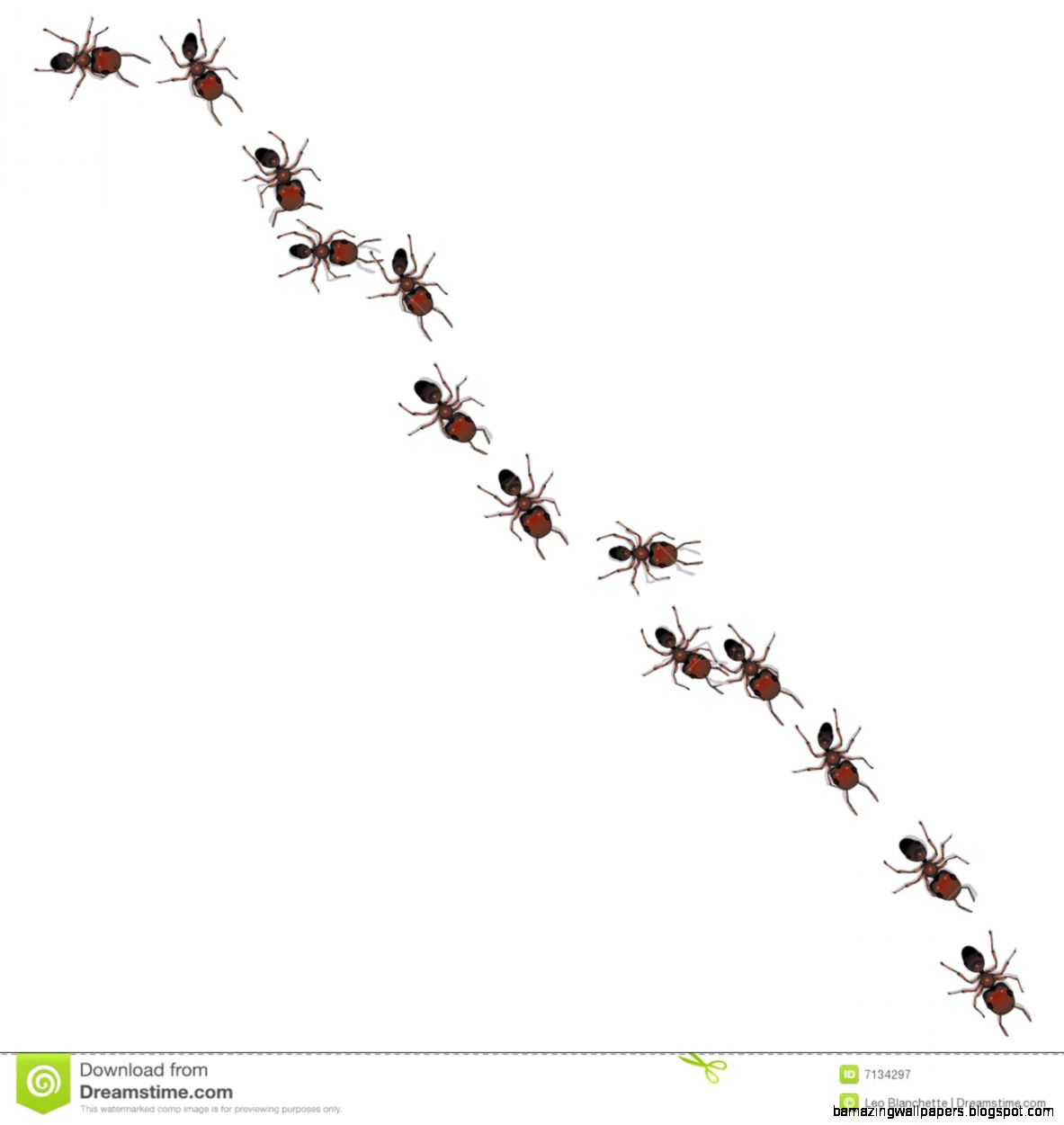 Line Of Ants Royalty Free Stock Photography   Image 7134297