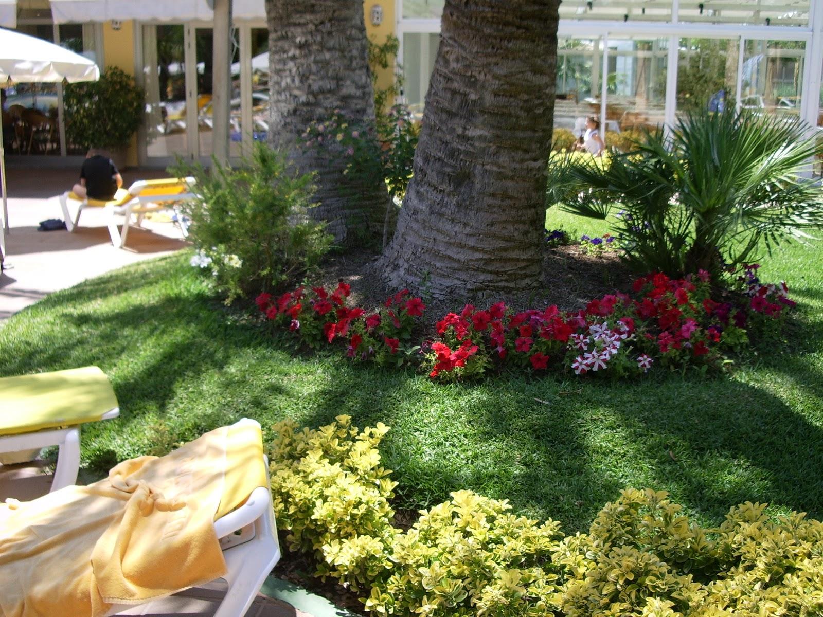 Plantas rboles y flores bases de rboles 2 alcorques for Jardines con palmeras