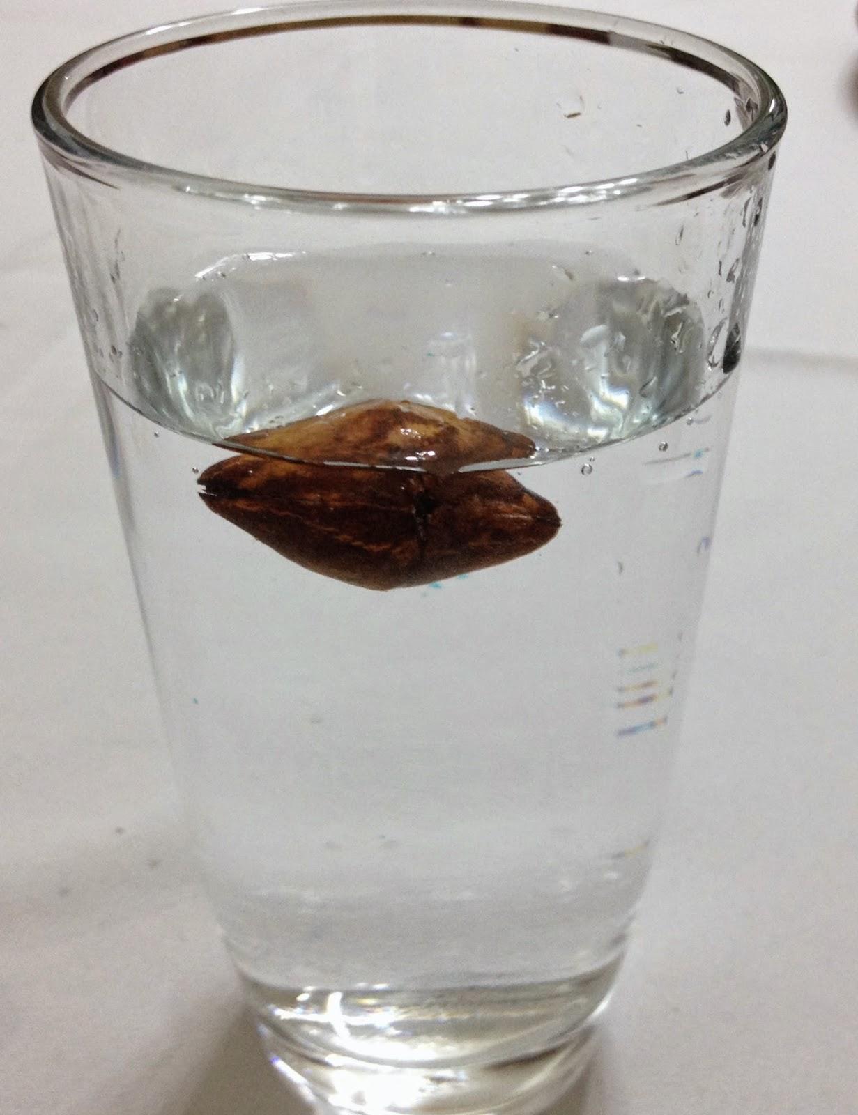 Ismê Lucas e sementes de aguai
