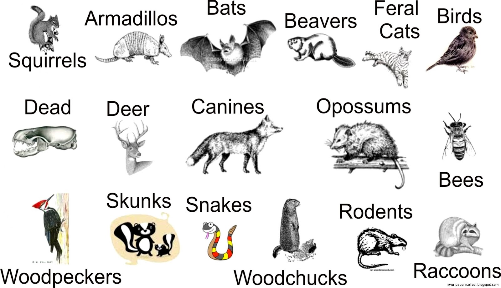 the classification of animals There are at least 7 classifications of animals known share to: what a conclusion of classification of animals what is a sea lions skin like share to.