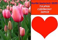 Kwiecień- tulipany