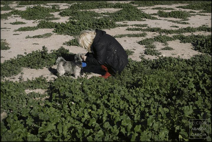 Chiva, fotografia, retrato, perro