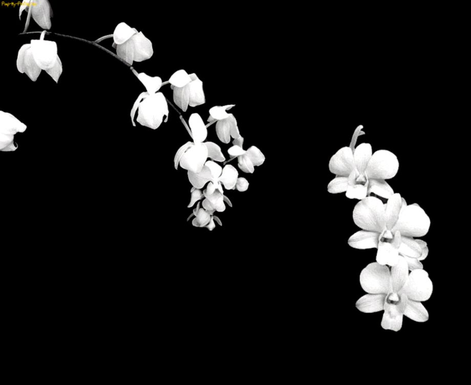 Black And White Flower Design For Background  Bouquet Idea