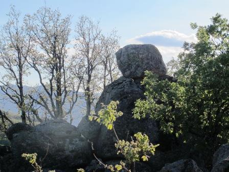 Dehesa de la Golondrina (Navacerrada) IMG_4227