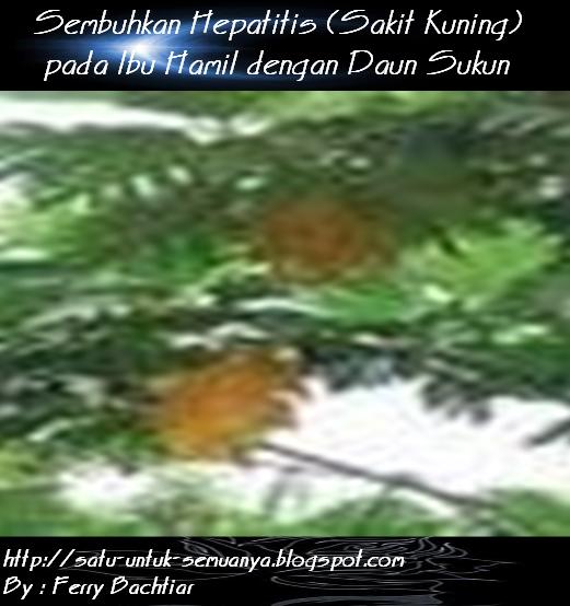sembuhkan hepatitis dengan daun sukun