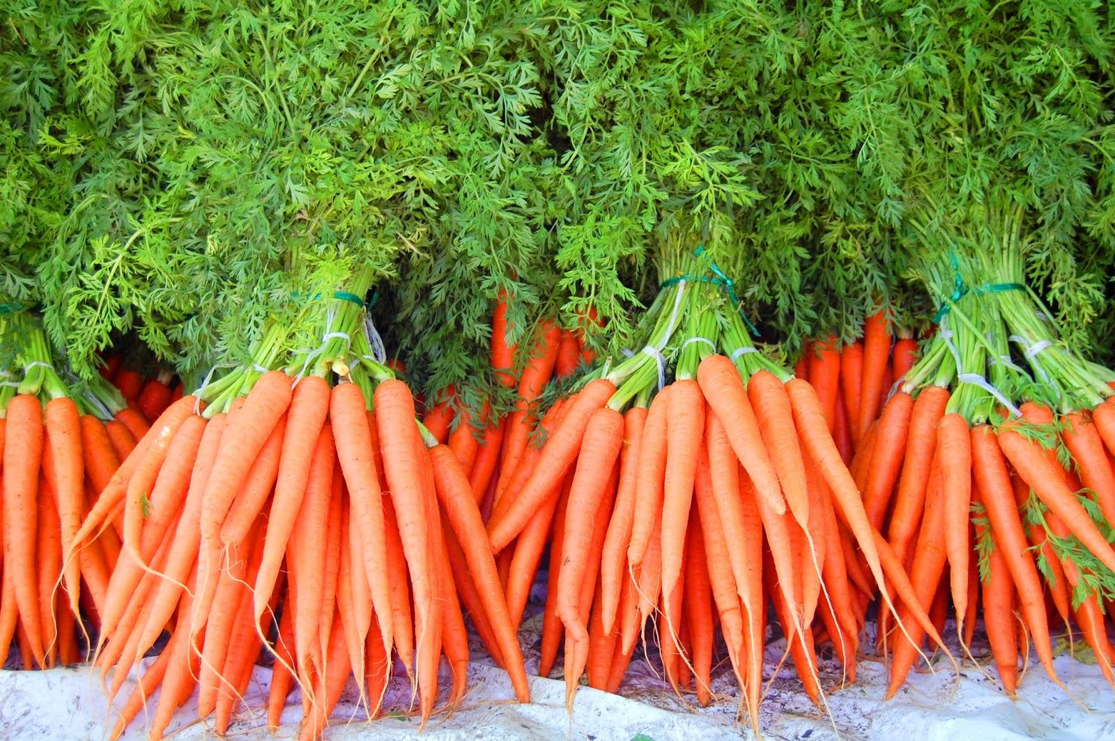 Выращивание моркови как бизнес: организация и план - бизнес идеи 95