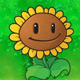 Girasol (Sunflower)