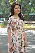 Rashi Khanna at Bengal Tiger event-thumbnail-20