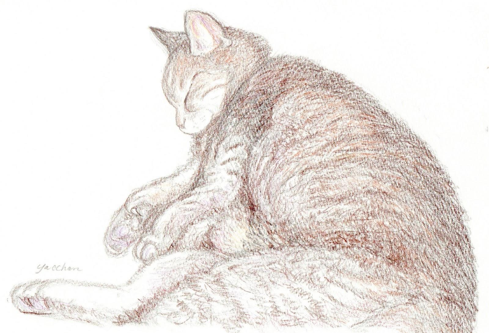 やっちゃんのネコと動物イラスト: リアル画をもうひとつ-「ちび子の寝姿」