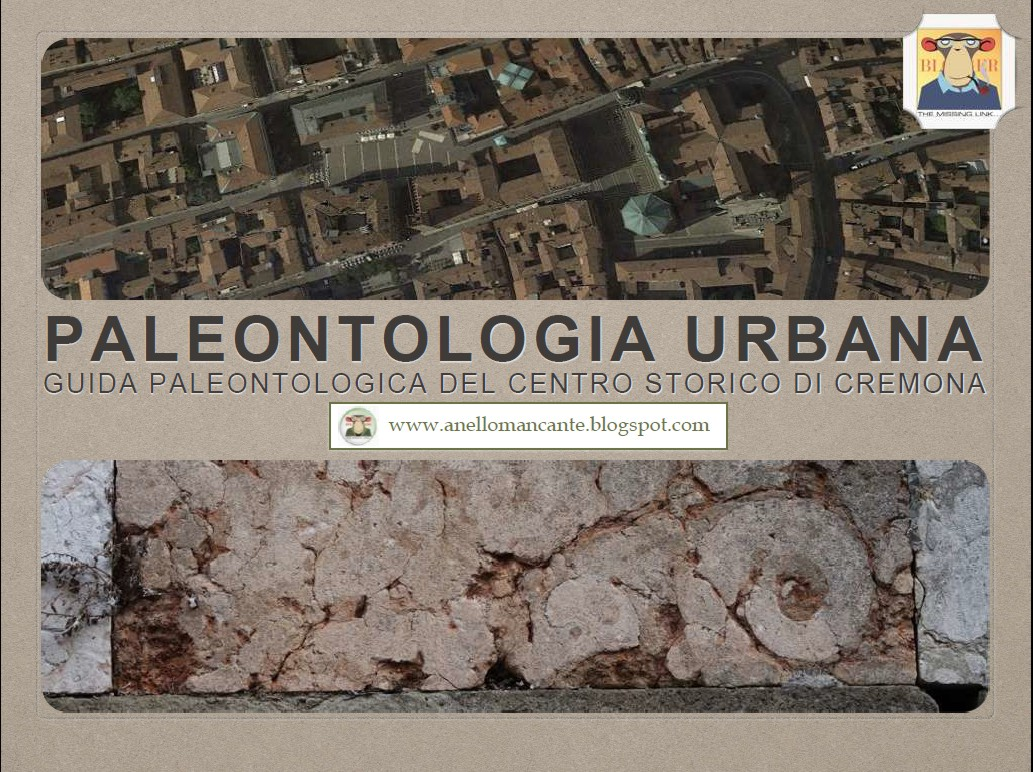 Paleontologia urbana di Cremona