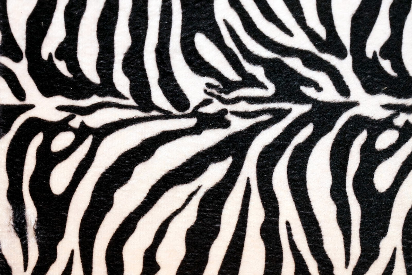 zebra print funny animals. Black Bedroom Furniture Sets. Home Design Ideas