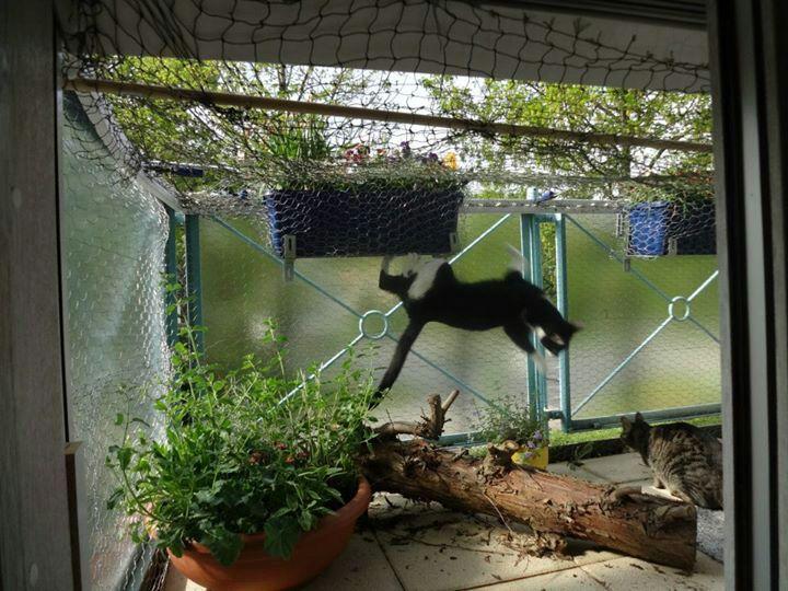 keine katze in einzelhaft katzenpflanzen und katzenbalkon. Black Bedroom Furniture Sets. Home Design Ideas