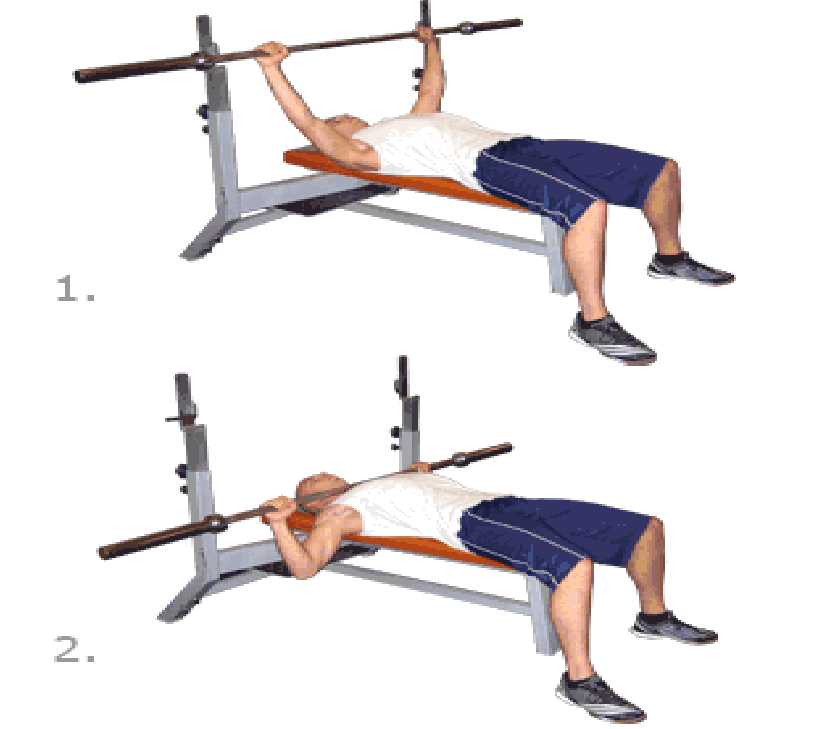 Step Exercises and Fitness: Chest Exercises : step 5 ...