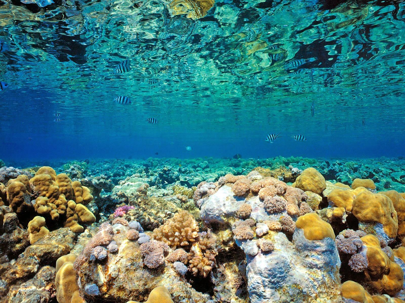 Desktop HD Wallpapers Free Downloads Coral Reef
