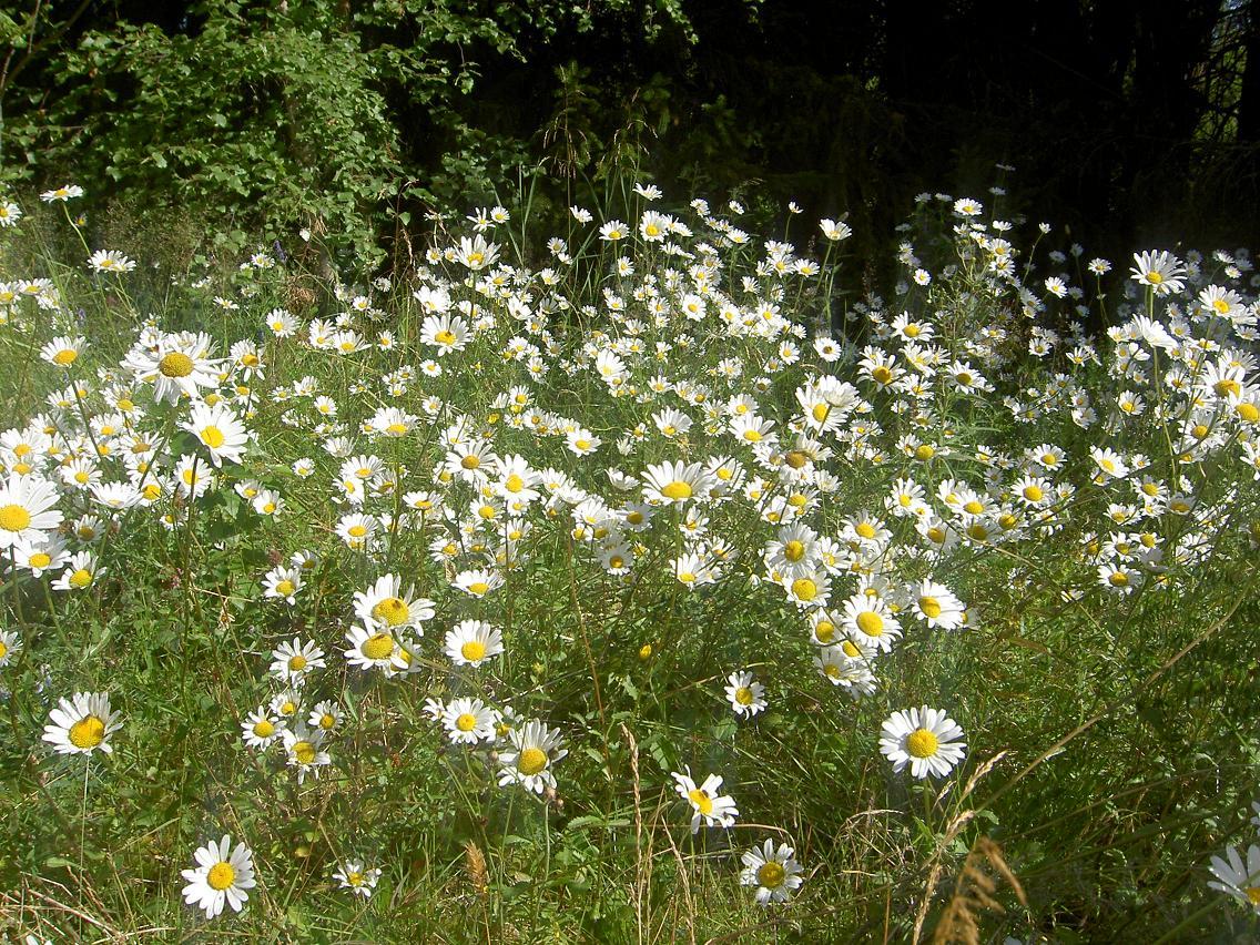 Blommande vackra ängar
