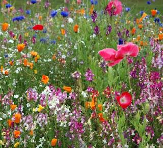 Explosión de color de flores silvestres